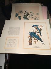 "VTG Lot of 11 John J. Audubon 1968-69 Prints 16 by 20"" Gulf Paper calendar Rare"