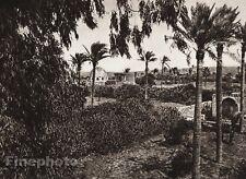 1925 Vintage GAZA Garden Palm Architecture Landscape ISRAEL Palestine Religion