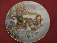 MALLARD DUCK collector plate BRUCE LANGTON Bradford Exchange WATER BIRDS Ducks