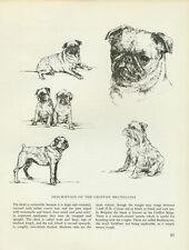 Brussels Griffon Bruxellois Dog Vintage 1963 Print Sketch Bridget Olerenshaw
