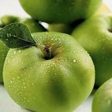 Bramley Apple Patio Fruit Tree in a 5L Pot Grow Your Own Fruit