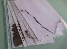 Herbarium (7-11 Pflanzen mit Wurzel) zur Auswahl aus über 100, Schule, Uni