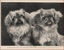 Two Pekingese Dogs, identified, vintage print, authentic 1935