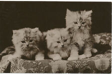 PC18224 Old Postcard. Kittens