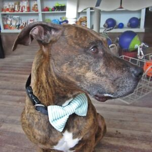 Green Seersucker Bow Tie for Dogs - Size M, L - Bow Tie - FREE SHIPPING
