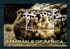 Ghana 2013 MNH Mammals of Africa 1v S/S Meerkat Wildlife Wild Animals Stamps