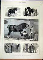 Original Old Antique Print Cart-Horse Show 1880 Agricultural Hall Judging 19th