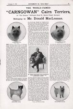 OLD CAIRN TERRIER OUR DOGS 1925 DOG BREED KENNEL ADVERT PRINT PAGE b181