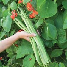 VEGETABLE RUNNER BEAN  LADY DI  30 SEEDS  ** FREE UK P&P**
