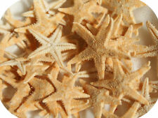 Starfish Unpolished Collectable Shells/Corals/Starfish
