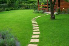 500Pcs Evergreen Lawn Grass Seeds Football Field Golf Villa Viable High Class