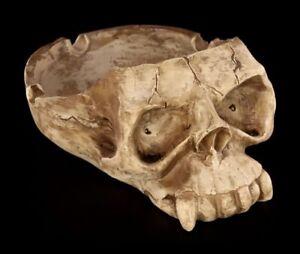 Aschenbecher - Centrier Crane - Totenkopf Schädel Ascher Skull