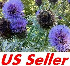 "40 Seeds Cardoon Artichoke Thistle ""Cynara"" E139, Home Gardening Seeds"