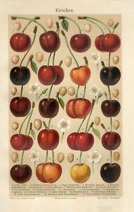 1895 CHERRY FRUIT Antique Chromolithograph Print