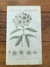 1812 elements of botany print - broad leav'd kalmia !