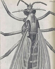 Vintage Robert Hooke Fly Biology Science Illustration 8x10 Canvas Art Print New