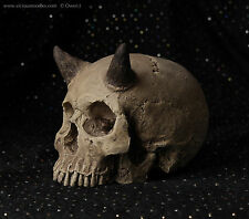 HUMAN SKULL REPLICA (horned) full size realistic, plaster of Paris