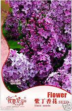 20 seeds of lilac Syringa French Vulgaris Flower Shrub Bush