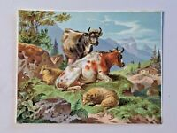 Antique Salesman Sample? Art Print Card Thomas Sidney Cooper? Cows, Sheep 6832