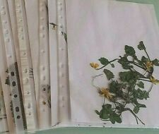 5-30 gepresste Pflanzen mit Wurzeln und Blüte für Herbarium, große Auswahl