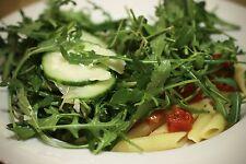 1,500+ Arugula- (Sylvetta) Wild Italian- Lettuce (Herb) Seeds- 2015 Seeds