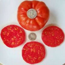 Andrew Rahart's Jumbo Red - Awesome Heirloom Tomato Seeds - Beefsteak - 40 Seeds