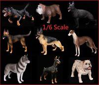 1/6 Scale Dogs Figure Bulldog Shepherd Lingbi Husky Rottweiler Doberman