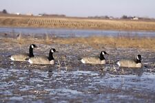 4 Greenhead Gear Pro Grade Active Pack Floater Canada Goose Decoys Avery Honker