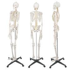 New Life Size Human Anatomical Anatomy Skeleton Medical Model Stand