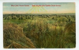 Wheat Field Western CANADA on C.P.R. line 1907-15 Pugh Specialty Co Postcard