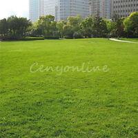 1000X Green Grass Saat Rohrschwingel Feld Rasen Turf Pflanzensamen Gartende A9H9