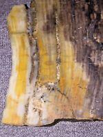 4.1oz Natural Petrified Wood Slab Rough Specimen Minerals Fossil Vegetation Rock