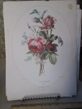 Vintage Print,ROSES AT MIOSOTIS,PJ Redoute