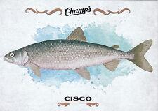 15/16 UPPER DECK CHAMPS FISH #F-11 CISCO *18911