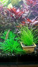 A set of 3 rare plants.