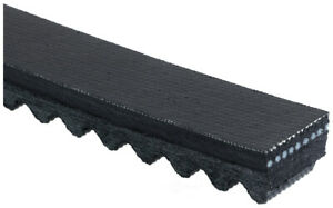 Accessory Drive Belt ACDelco T24403