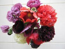 SALE Papaver Somniferu poppy seed for flowers in Spring & Summer MIX 2000 +