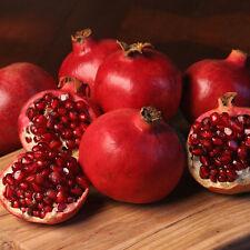 Granada-Púnica Granatum - 50 semillas-fruta exótica-Bonsai