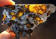 Rarest Pallasite Marjalahti Meteorite Museum Unique Example Slice