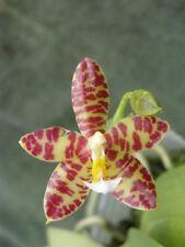 Plantes et jeunes pousses d'orchidées
