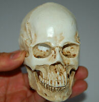 Resin Replica Human Skull Model   Anatomy Halloween Party Prop White