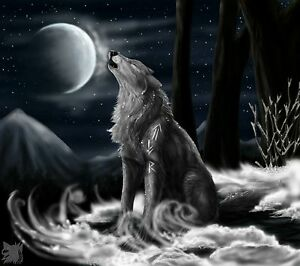 Black And White Wolf - Night Moon Landscape Large Canvas Picture  20x30inch