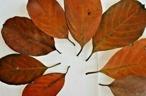 5-1000Pcs Jack Fruit Dried Leaves Ketapang Leaf Shrimp Betta Fish Aquarium Care