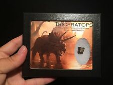 Boite vitre verre Dent Triceratops fossile de Hell Creek Montana / tooth fossil