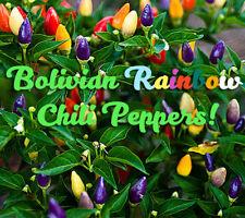 Bolivian Rainbow Chili Pepper Seeds *VERY RARE* FREESHIPPING
