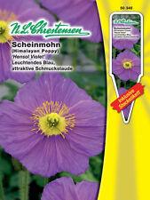 Scheinmohn 'Hensol Violet' - Meconopsis betonicifolia, ca. 40 Samen 50345