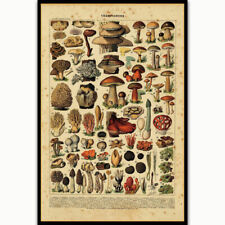 W723 Art Mushroom Breeds Chart Biology Kids Modern Poster 20x30 24x36