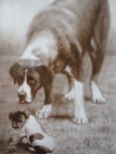 De Reszke Cigarette Card Does Your Mother Know - Dog Pup PHOTO J.Millhoff London