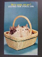 Spencer Iowa Greetings From Cute Kittens In Wicker Basket Vintage Postcard 1950s