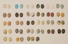 Stone collection, rock specimen, gemstones, jade, quartz, agate, turquoise,